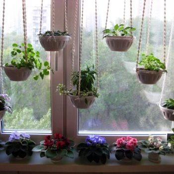 Эти растения обязательно нужно держать дома 3257