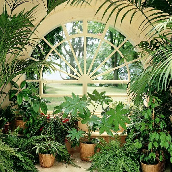 Пересадка растений в зимний сад