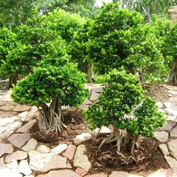 Когда сажать деревья осенью: двойная выгода