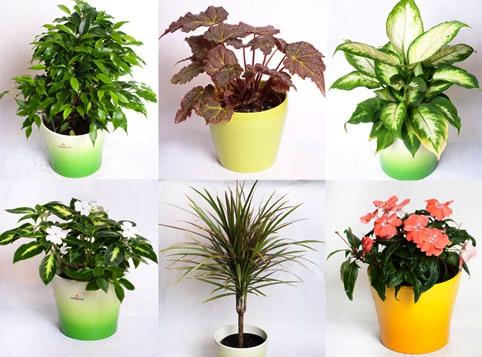 Готовимся к зиме – что делать с комнатными растениями