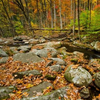 Что делать с листвой: компостирование или…?