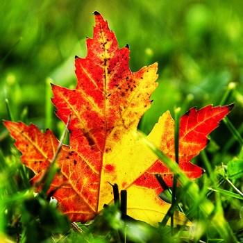Как правильно обработать сад осенью: с кем и какими методами боремся