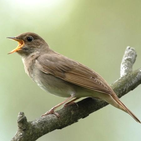 Привлекаем в сад птиц