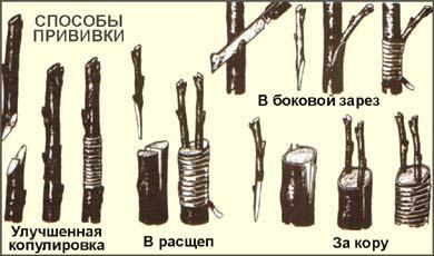 Как и когда делать обрезку плодовых деревьев - ec059