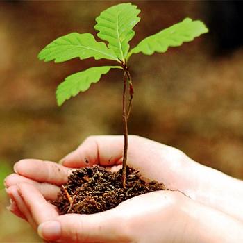 Сбор семян деревьев и кустарников для посадки весной