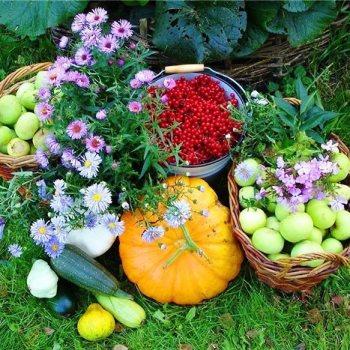 Что мы сейчас делаем в саду: октябрь-ноябрь