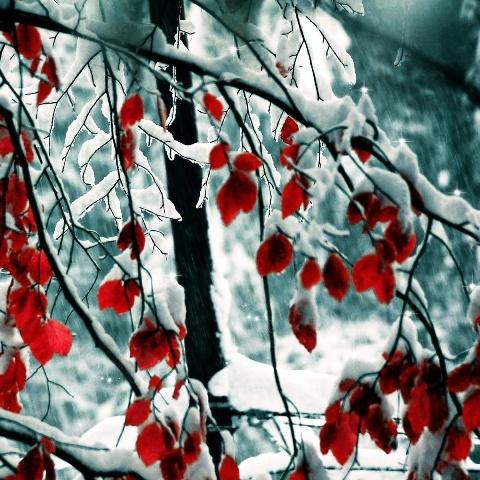 Не спешите выкорчевывать замерзший в суровую зиму сад – деревья еще можно спасти