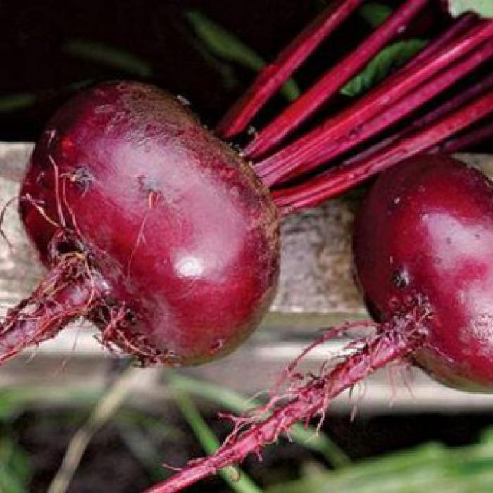 Подзимний посев свеклы: сроки и подготовка семян