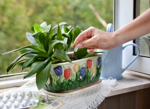 Для лучшего роста комнатных растений в домашних