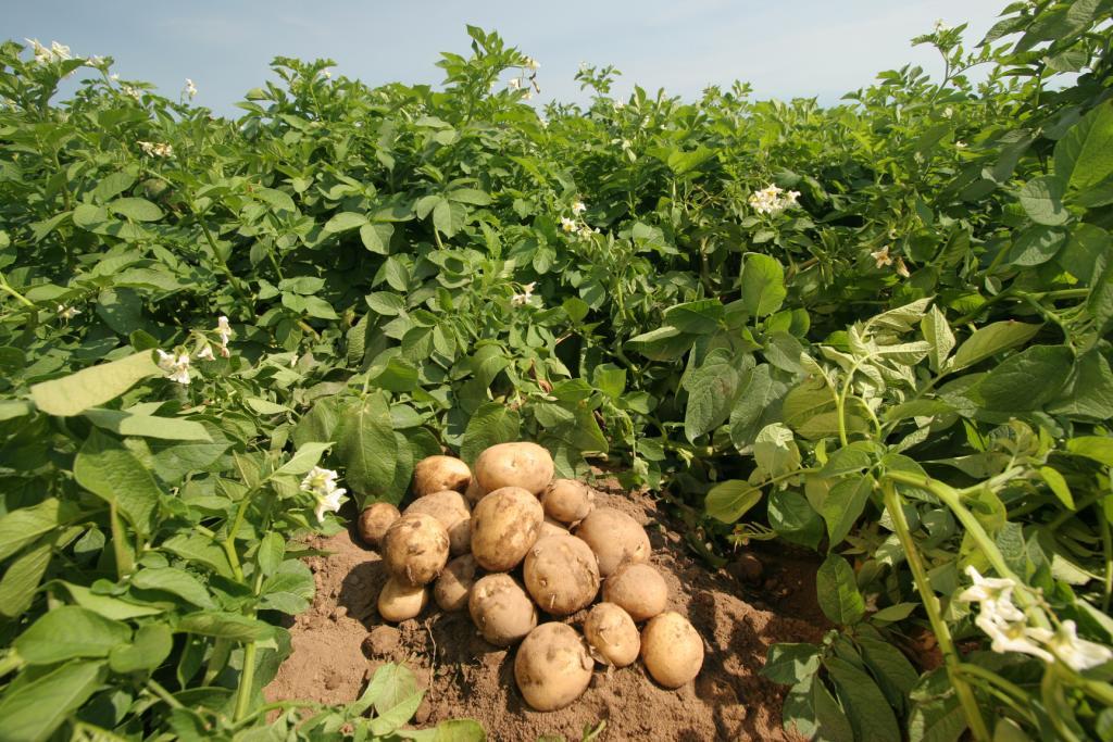 Картинки по запросу Как удвоить урожай Чередование посадок