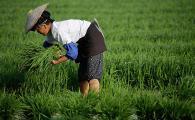 Новые технологии для китайских аграриев