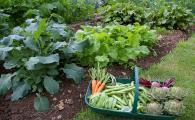 Овощи, которые растут в тени