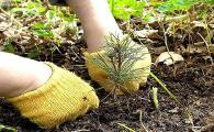 В Подмосковье высадят около 1,2 млн. саженцев в рамках акции по посадке леса