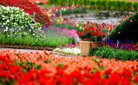 Москву в 2016 г. украсит около 61 млн. цветов